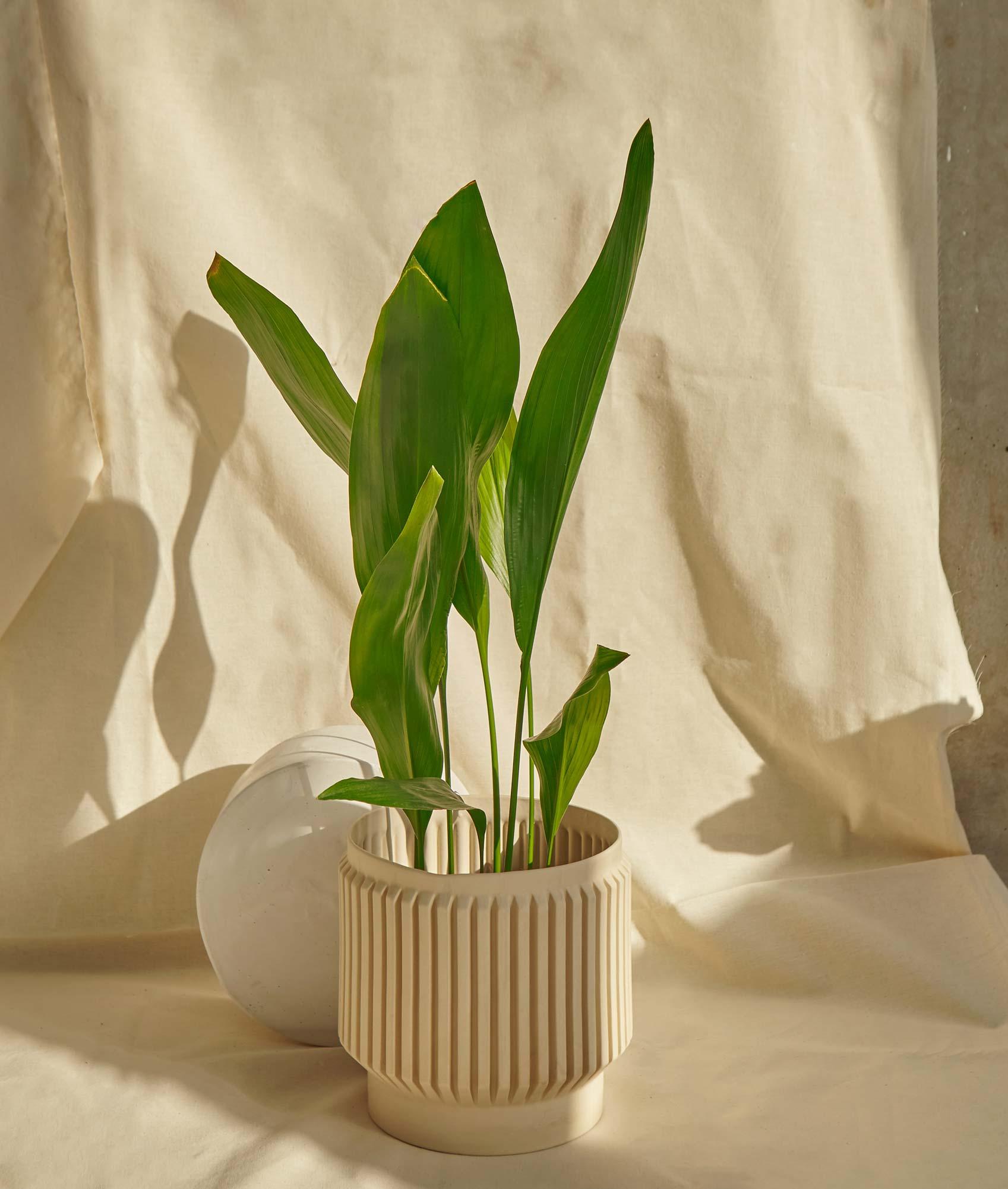 tokiton-plant-pot-01